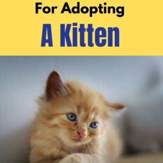 how to adopt a kitten