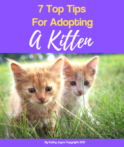 7 top tips for adopting a kitten
